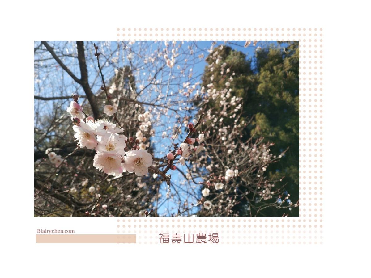 【春遊賞花懶人包】|國內春節、過年走春行程,春季賞花景點推薦,旅遊補助折扣優惠