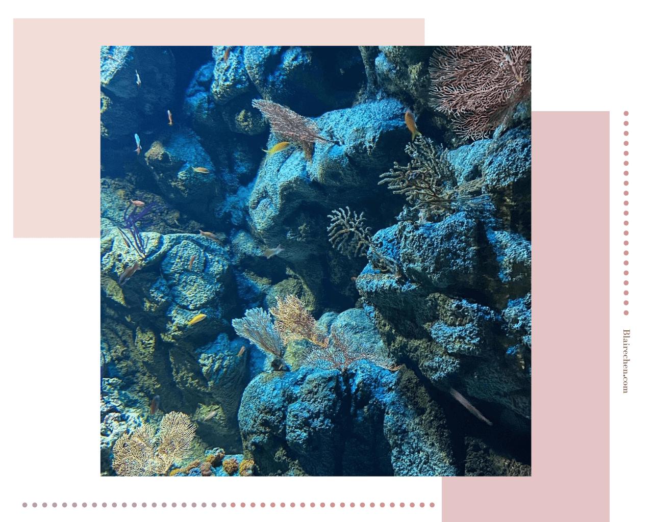 【桃園Xpark水族館】|八景島水族館XPARK水生公園開幕!門票預購、交通位置、全區必拍最美打卡點攻略,等你來!