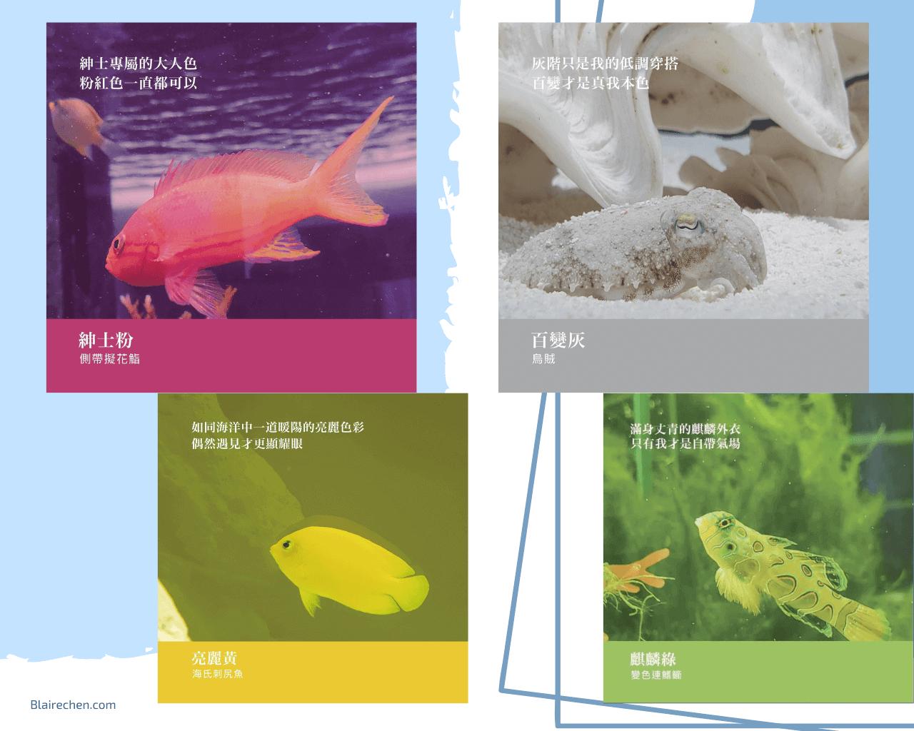 【屏東旅遊推薦】|色票控請注意!屏東海生館,帶你進入夢幻海洋色系,還有企鵝的餵食體驗、一起夜宿海生館!