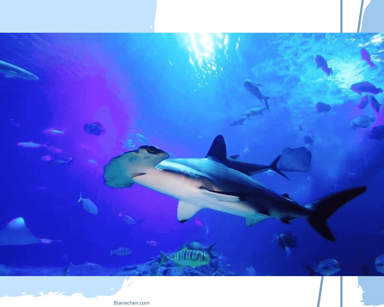 【屏東旅遊推薦】 色票控請注意!屏東海生館,帶你進入夢幻海洋色系,還有企鵝的餵食體驗、一起夜宿海生館!